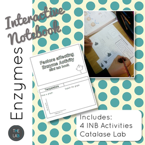 Enzyme Interactive Notebook