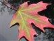 autumnleaf2