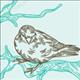 littlebird22