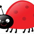 ladybug3