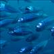 Waterfin