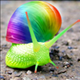 snail_friendly