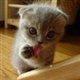 kittenface