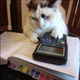 mathcat1