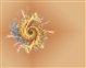 spiral8