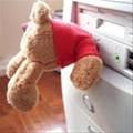 TeddyB