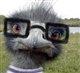 oldbird