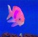 pinkfish6779