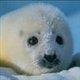 Polar pup