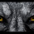 Yellowwolf