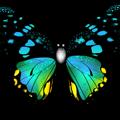 petaloutha