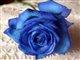 bluerose