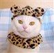 olivethecat