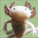 AxolotlMan