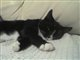 furrycat_77