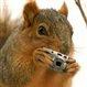 squaresquirrel