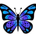butterflybrain1