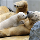angel_kk99
