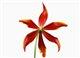 tulip123