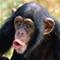 chimp is ma nickname