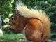 squirrel9367