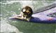 surf kitty too