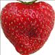 strawberrygirl15