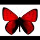 redbutterfly