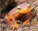 salamander56