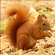 squirrell01