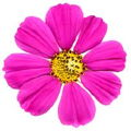 pinkmarshmallow2