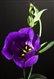 PurpleAubergine