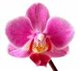Orchid_Meadow